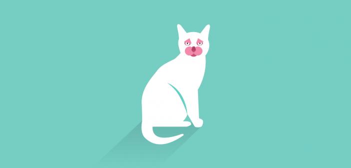 wie kann ich meine Katze nach Australien mitnehmen
